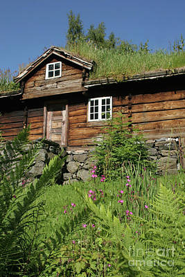 Photograph - Norwegian Wood by PJ Boylan