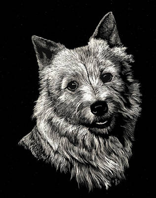 Norwich Terrier Art Print by Rachel Hames
