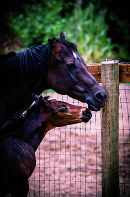 Photograph - Nose To Nose by Bryan Carter