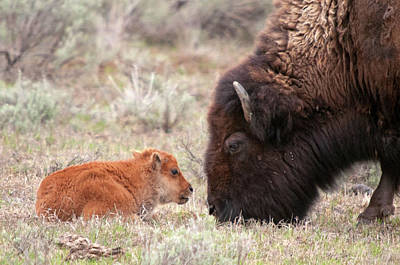 Photograph - Nose To Nose by Steve Stuller