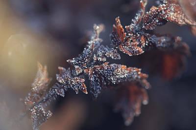 Photograph - Nostalgia. Frozen Leaf. Natural Wonder by Jenny Rainbow