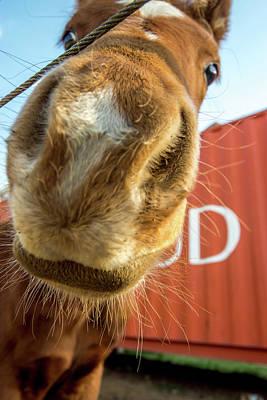 Photograph - Nosy Horse by Tina Ernspiker