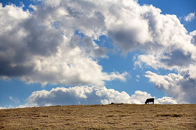 Clouds Photograph - Not A Cow In The Sky by Peter Tellone