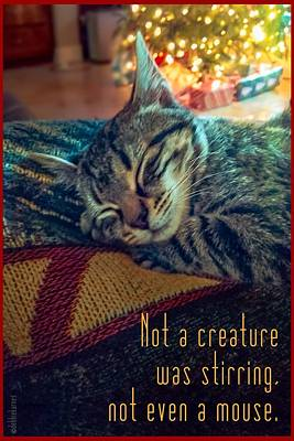 Photograph - Not A Creature Was Stirring by Debbie Karnes