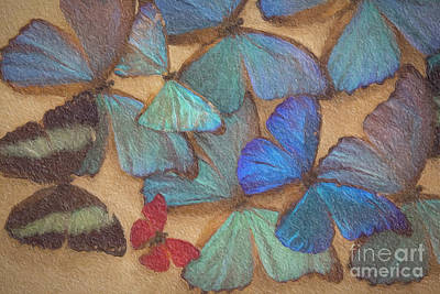 Butterfly Mixed Media - Not Alone by David Millenheft