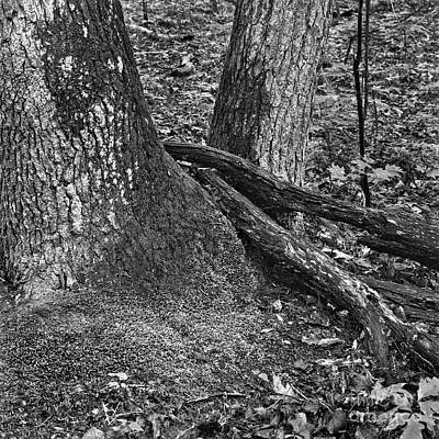 Photograph - Not Alone by Patrick M Lynch