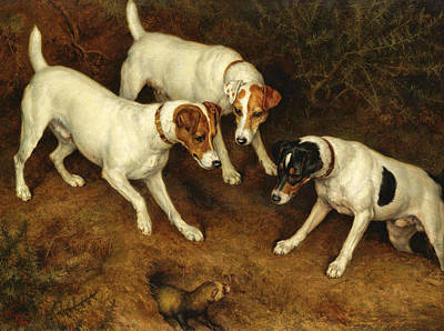 Painting - Not At Home. Cracknell Olive And Jack Russell On A Ferret by Frank Paton