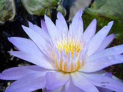 Photograph - Buttercup Bliss by Michele Penn