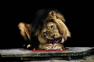 Animals Royalty-Free and Rights-Managed Images - Not for the Faint Hearted by Martin Newman