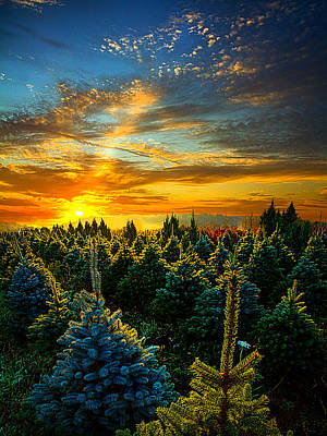 Natur Photograph - Not Forgotten by Phil Koch