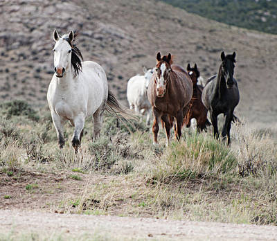 Photograph - Not So Wild Horses by Al Reiner