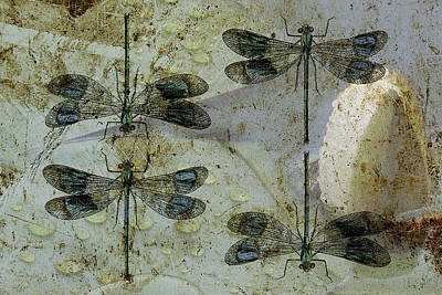Tiger Dragonflies Photograph - Nothing But A Rumor II by Char Szabo-Perricelli