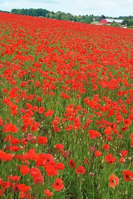 Photograph - Nottinghamshire Poppies by David Birchall