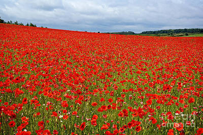 Photograph - Nottinghamshire Poppy Field by David Birchall