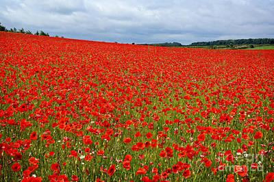 Photograph - Nottinghamshire Poppy Field by David Birchall