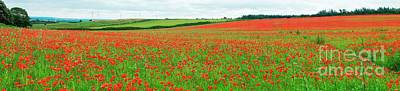 Photograph - Nottinghamshire Poppy Field Panorama by David Birchall