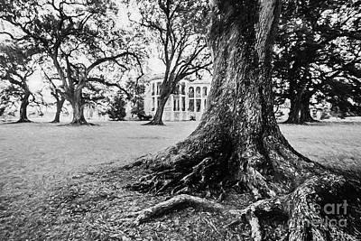 Photograph - Nottoway Under The Oaks - Bw by Scott Pellegrin