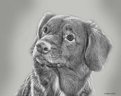 Retriever Digital Art - Nova Scotia Duck Retriever by Larry Linton