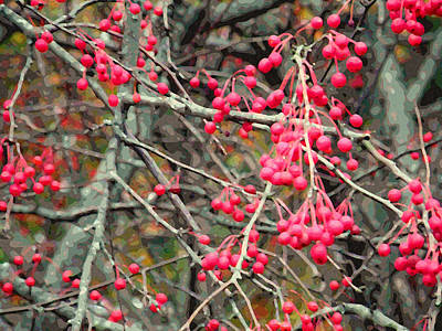 Photograph - November Crabapples by Jean Hall
