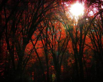 Photograph - November Woods by Timothy Bulone