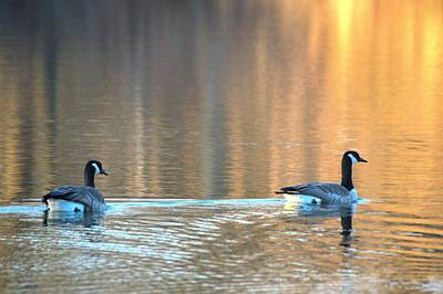 Photograph - November Geese by Bonfire Photography