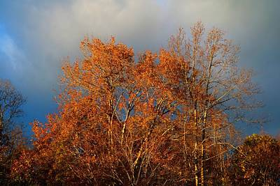 Photograph - November Gold by Kathryn Meyer