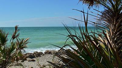 Photograph - November In Florida by Carol Bradley
