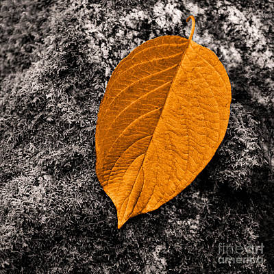 Fallen Leaf Digital Art - November Leaf by Ari Salmela