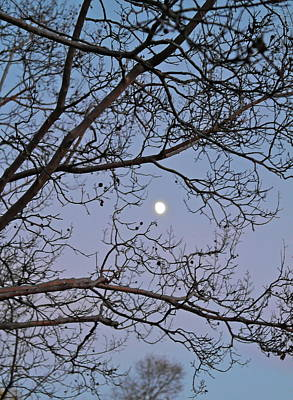 Photograph - November Moon by Michele Myers
