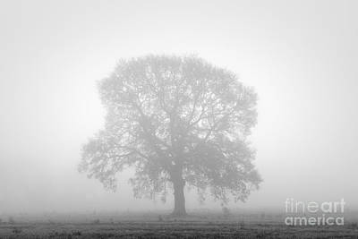 Balck Art Photograph - November Oak by Richard Thomas