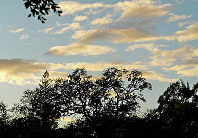 Photograph - November Sky by Michele Myers