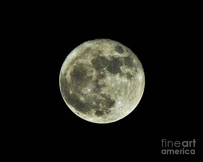 Photograph - November Supermoon 2016 by Kelly Nowak