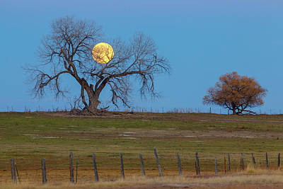 Photograph - November Supermoon by James BO Insogna