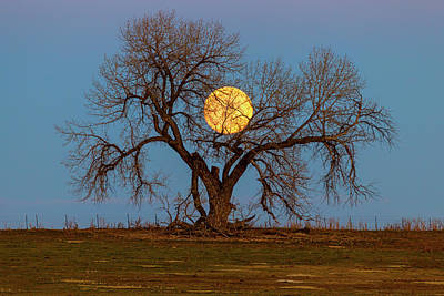 Photograph - November Supermoon Heart Tree by James BO Insogna