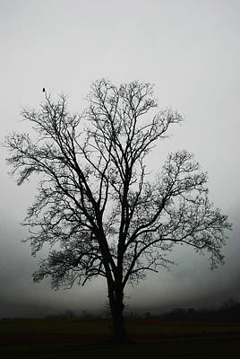 November Tree In Fog Art Print by Patricia Motley