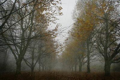 Fallen Leaf Photograph - November Wanderings by Georgia Fowler
