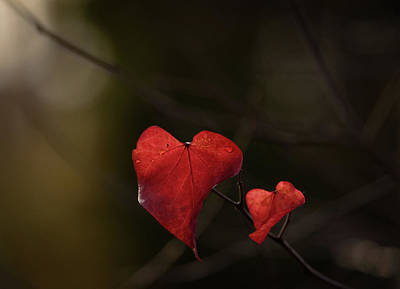 Photograph - Hearts On Fire by Keith Boone