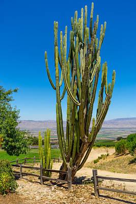 Photograph - Now That's A Cactus by Derek Dean