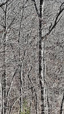 Photograph - Nowhere To Hide by Rachel Hannah