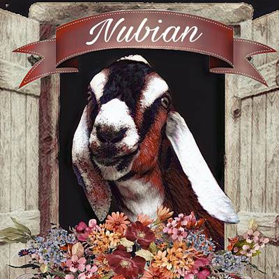 Painting - Nubian Goat Design by Michele Carter