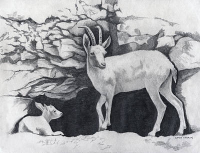 Drawing - Nubien Ibex Drawing by Sandra Church