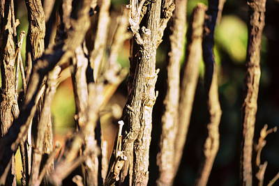 Photograph - Nude Stems by Glenn McCarthy Art and Photography