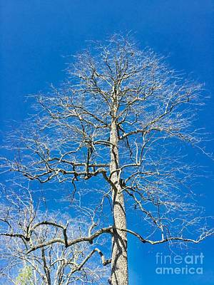 Photograph - Nude Tree by The Art of Alice Terrill