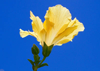 Numinous Yellow Art Print