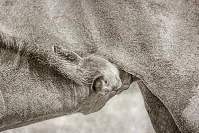 Photograph - Nursing Foal by Jennie Marie Schell