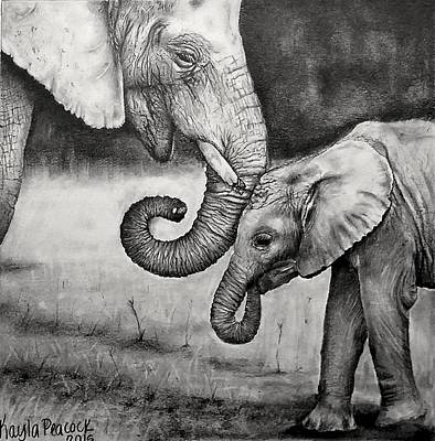 Elephant Pencil Drawing Drawing - Nurture by Kayla Peacock