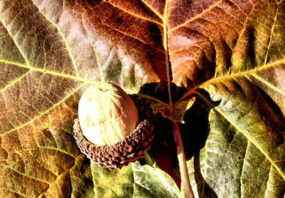 Winter Wedding Flowers Photograph - Nut On A Leaf by Karen Scovill