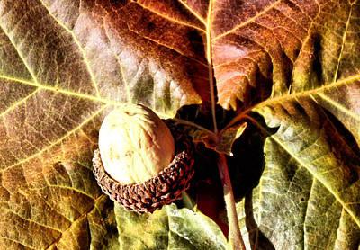 Cousins Photograph - Nut On A Leaf by Karen Scovill