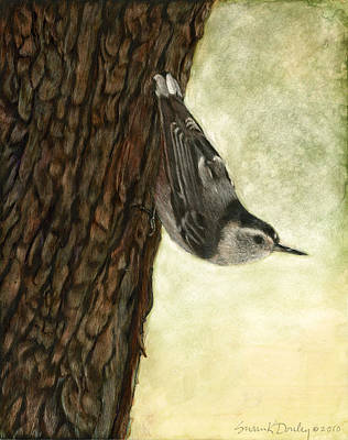 Nuthatch Acrobat Art Print by Susan Donley