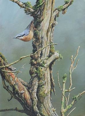 Art Print featuring the painting Nuthatch by Alan M Hunt